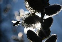 insectos insecticidios